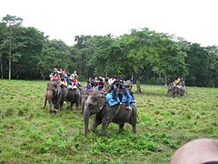 Chitwan National Park (2010)-87.jpg