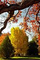 """Cincinnati – Spring Grove Cemetery & Arboretum """"Autumn Framing Autumn"""" (15763315416).jpg"""