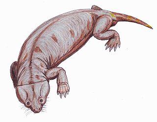 <i>Cistecephalus</i> Assemblage Zone
