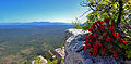 Claret cup bloom on Mogollon Rim.jpg