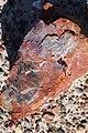 Close look of mineral log.jpg