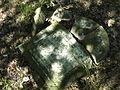 Cmentarz żydowski w Okuniewie 03.JPG