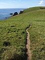 Coast path on Hoist Point - geograph.org.uk - 1511488.jpg