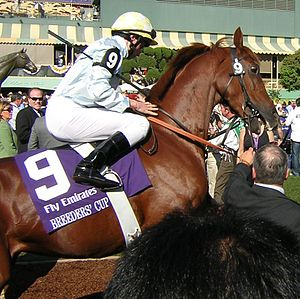 Conduit (horse) - Conduit before the 2008 Breeders' Cup