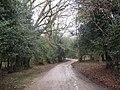 Cott Lane, Burley - geograph.org.uk - 740141.jpg
