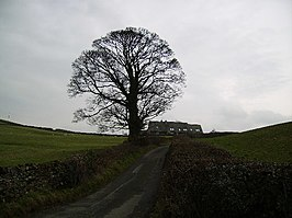 Country Road - geograph.org.uk - 104988.jpg