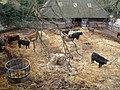 Crockshard Farm cattle in Goodnestone Road - geograph.org.uk - 667680.jpg