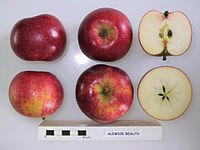 Cross section of Aldwick Beauty, National Fruit Collection (acc. 1970-001).jpg