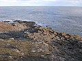 Cullernose Point - geograph.org.uk - 1188743.jpg