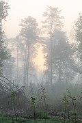 Dülmen, Kirchspiel, Nebel in der Bauerschaft Börnste -- 2021 -- 8095.jpg
