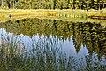 Dīķis, Jaunbērzes pagasts, Dobeles novads, Latvia - panoramio.jpg
