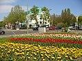 Dahlem - Tulpen - geo.hlipp.de - 35923.jpg