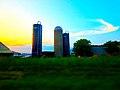 Dairy Farm with Three Silos - panoramio (2).jpg