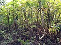 Daniel Pavon Cuellar Mini Forest.jpg