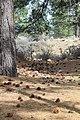 Davis Creek Park - panoramio (15).jpg