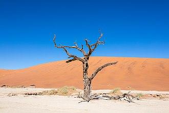 Deadvlei - Image: Dead Vlei, Sossusvlei, Namibia, 2018 08 06, DD 086