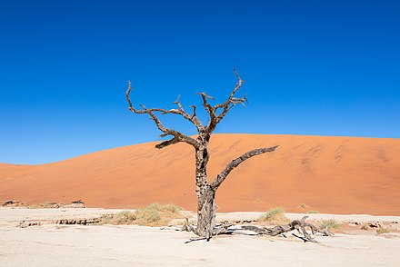 Dead Vlei, Sossusvlei, Namibia, 2018-08-06, DD 086.jpg