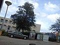 Delft - 2011 - panoramio (312).jpg