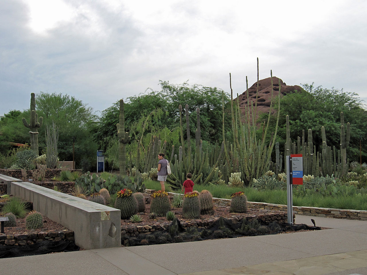 File Desert Botanical Garden Phoenix 8226714836 Jpg Wikimedia Commons