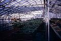 Dicksons Florist greenhouse beds 03.jpg