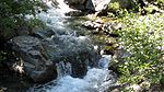 Dipper at small cascade of North Fork Teanaway River.jpg