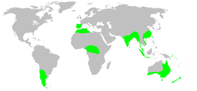 Distribution.hexathelidae.1.png