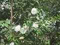 Dixon Gardens Memphis TN 2014-04-06 038.jpg