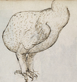 Dodo - 3 From the Journal of the Gelderland 1601.png