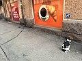 Dog by K Market (45523537352).jpg