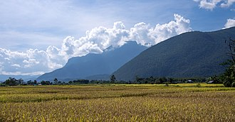 Chiang Dao District - Rice paddies with Doi Chiang Dao in the clouds