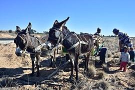 Donkey cart, Askham, Askham, Northern Cape, South Africa (20529831502).jpg