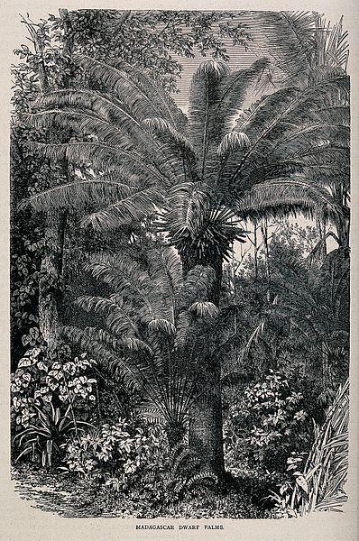 palms - image 8