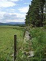 Edge of Hill of Coull forest - geograph.org.uk - 867109.jpg