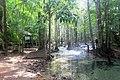 Emerald pool park, Krabi province, Thailand 2018 1.jpg