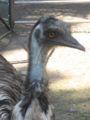 Emu2.jpg
