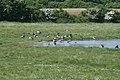 Engene ved Borreby Gods - panoramio - møssefar.jpg