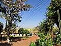 Entrada do Engenho Santo Mário em Catanduva. O local é ponto turístico da região, com a venda de bebidas artesanais e garapa. A visita no antiquário nos remete aos tempos antigos. - panoramio.jpg