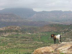 Ethiopian Highlands - Wikipedia, the free encyclopedia