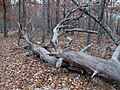 FDR State Park Wolfden loop 1-12-09 - panoramio (2).jpg