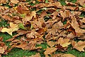 Fallen autumn leaves.jpg