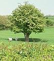 Farmland off Newton Lane near Leicester - geograph.org.uk - 417213.jpg