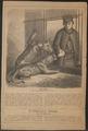Felis leo - 1868 - Print - Iconographia Zoologica - Special Collections University of Amsterdam - UBA01 IZ22100053.tif