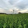 Field - panoramio (42).jpg