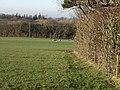 Field Boundary - geograph.org.uk - 686209.jpg
