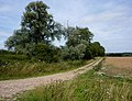 Field and trees - geograph.org.uk - 1424821.jpg