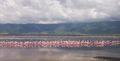 Flamand rose Ngorongoro Tanzanie.JPG