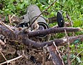 Flickr - Israel Defense Forces - Anti-Tank Missile Found on Militant.jpg