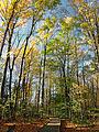 Flickr - Nicholas T - Hogback Ridge Park (3).jpg