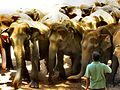 Flickr - ronsaunders47 - ELEPHANTS UP CLOSE 3.jpg