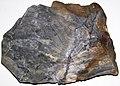 Flint (Vanport Flint, Middle Pennsylvanian; Nethers Flint Quarries, Flint Ridge, Ohio, USA) 211.jpg